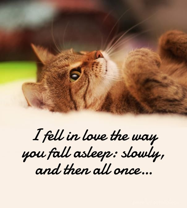 Our favorite unconditional love quotes with images. enjoy sharing these quotes about unconditional love for him and her that will make them feel loved.