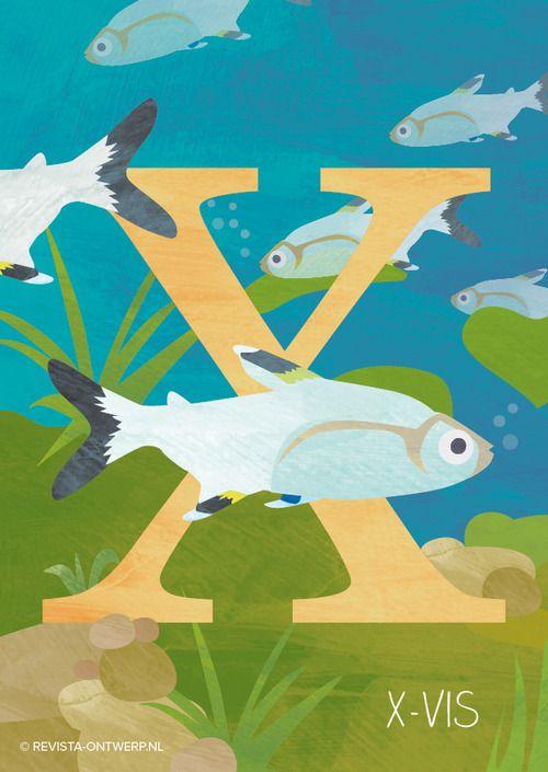 De X is van … tja, ken jij een dier dat begint met de X? En dan ook nog in het Nederlands, wat wel een vereiste is voor mijn alfabet. Soms moet je zoeken naar een creatieve oplossing. Deze vis wordt in het Engels de x-ray tetra genoemd, de officiële naam is Pristella maxillaris. Dit heb ik vrij vertaald naar X-vis en zo heeft ook deze lastige letter een bijpassend dier!