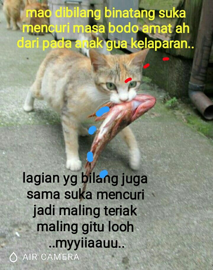 Download 940+ Gambar Binatang Lucu Dengan Kata Kata Terupdate