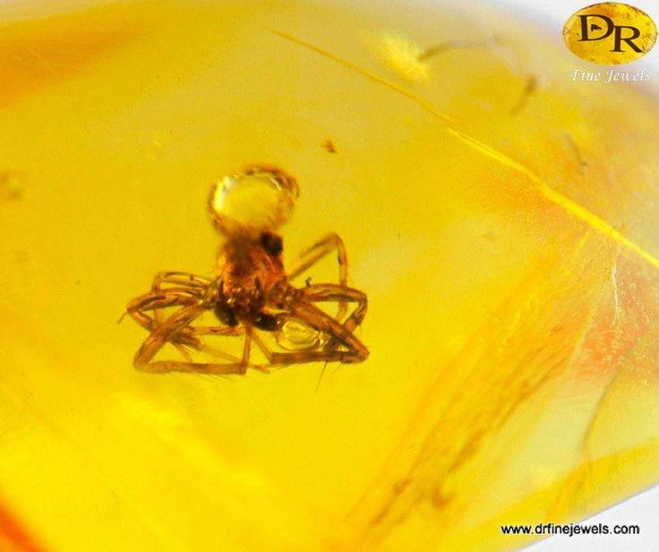 Amber Fossils: Hold a Moment in Time in Your Hands Amber fossils have always captivated gem lovers because each stone represents a frozen moment in time, with only the mysterious inclusions to hint at its story.  You can purchase both yellow and blue raw amber here: https://www.drfinejewels.com/www.drfinejewels.com/dominican-spider-amber-fossil/rare-amber-fossils-stone-4/  #amberfossils #drfinejewels #amberstone
