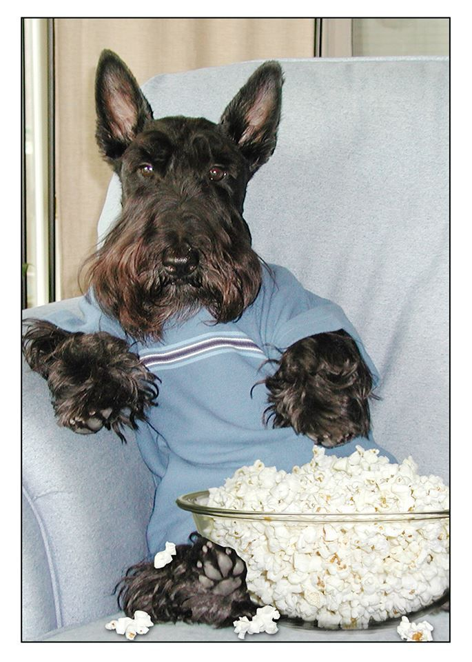 As much as we love popcorns, dogs do too.Just eliminate the butter and salt. And make sure you supervise them while they're enjoying it.