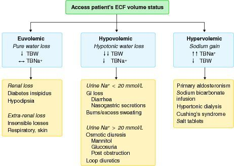 Important causes of hypernatremia correlating with the bedside determination of the ECF volume status.  ECF, extracellular fluid; GI, gastrointestinal; TBNa+, total body sodium; TBW, total  body water.