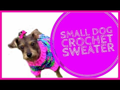 How to Crochet a Small Dog Sweater - YouTube