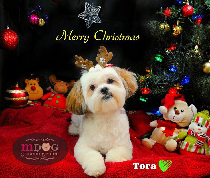 Merry Christmas Tora!