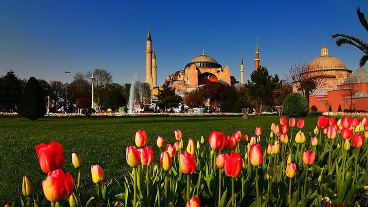 Tulips and Mosques
