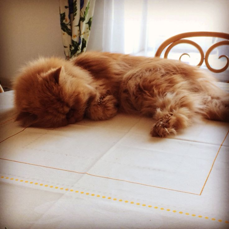 Днем сплю на столе...