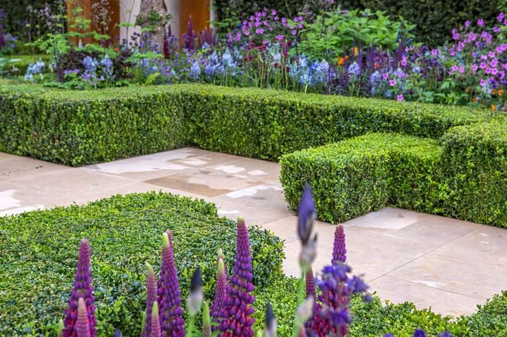 #Box #hedging adds structure and impact to The Healthy Cities Garden at the Chelsea Flower Show 2015 / RHS Gardening