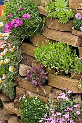 Stone wall planted with succulent plants.