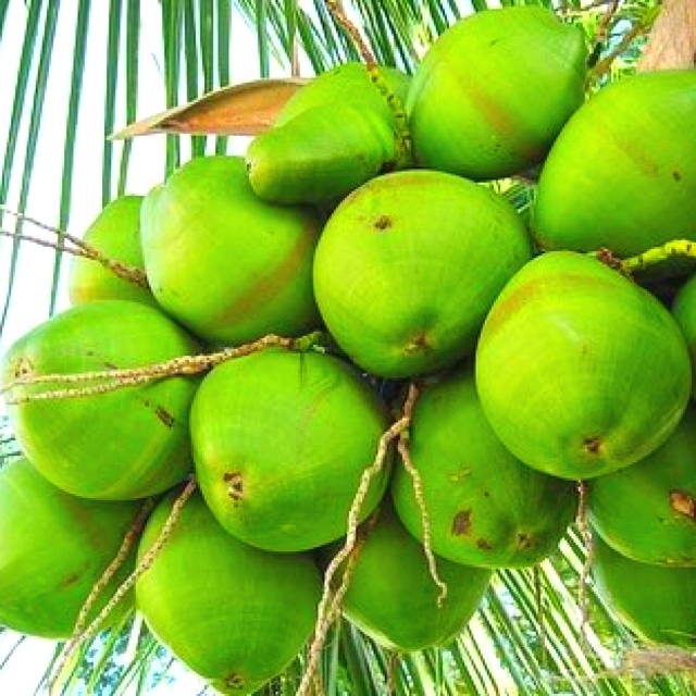 COCOS fruit