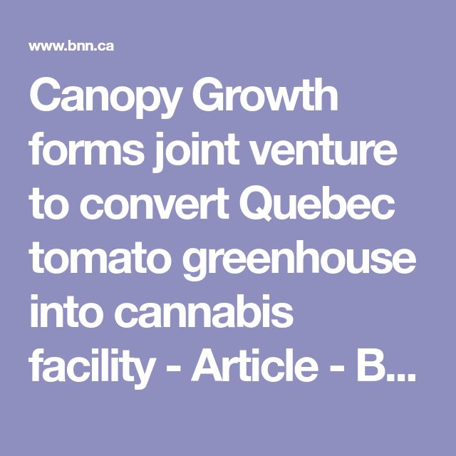 Canopy Growth forms joint venture to convert Quebec tomato greenhouse into cannabis facility - Article - BNN