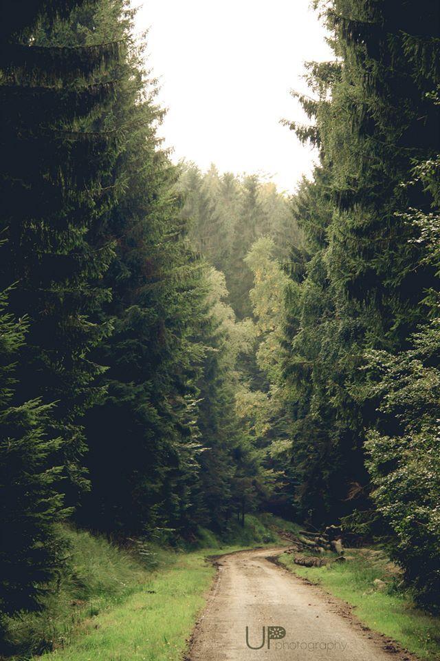 Autumn forest in Eupen