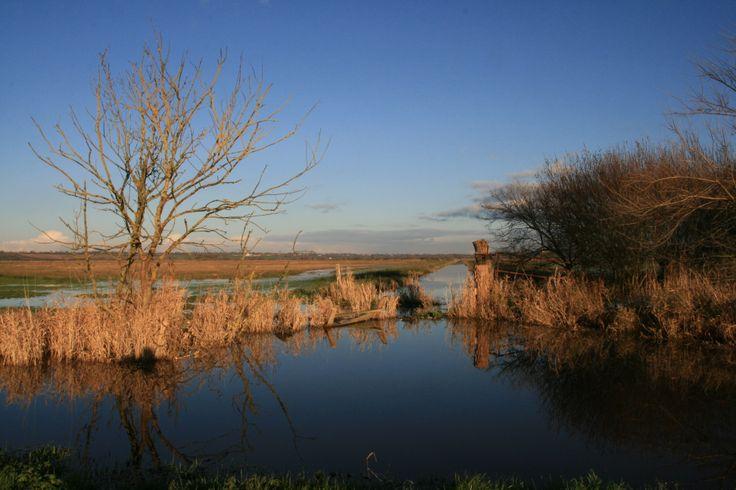 En hiver, les marais situés à l'ouest du Bessin offrent des paysages improbables où l'eau semble rejoindre le ciel. ©S.Barrault