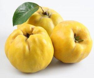 Dula - zabudnuté ovocie našich babičiek - Magazín - Varecha.sk