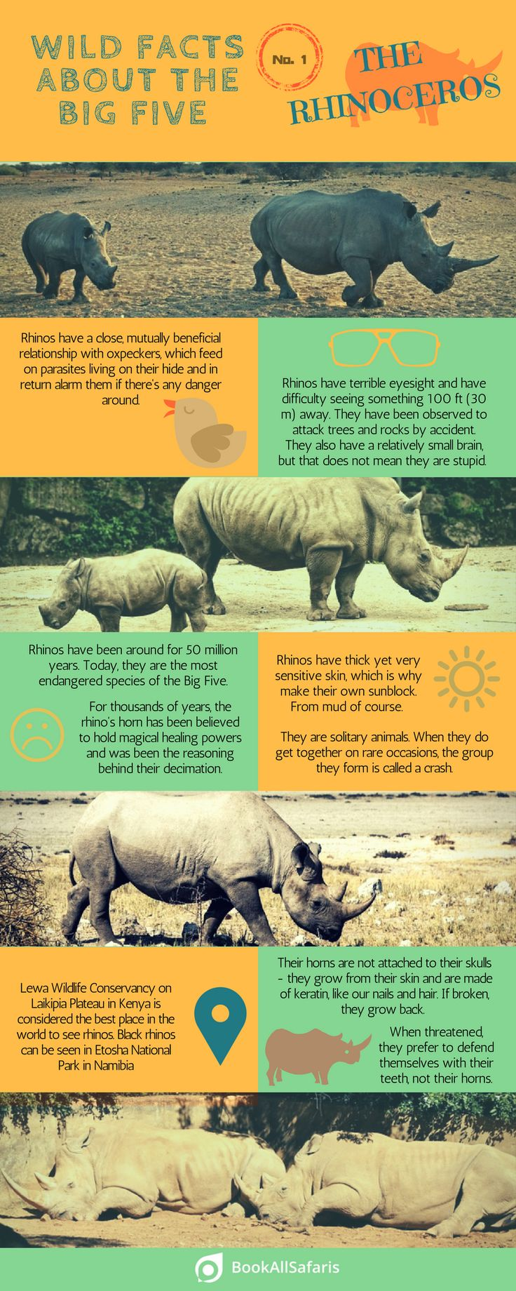 facts-rhinos-infographic