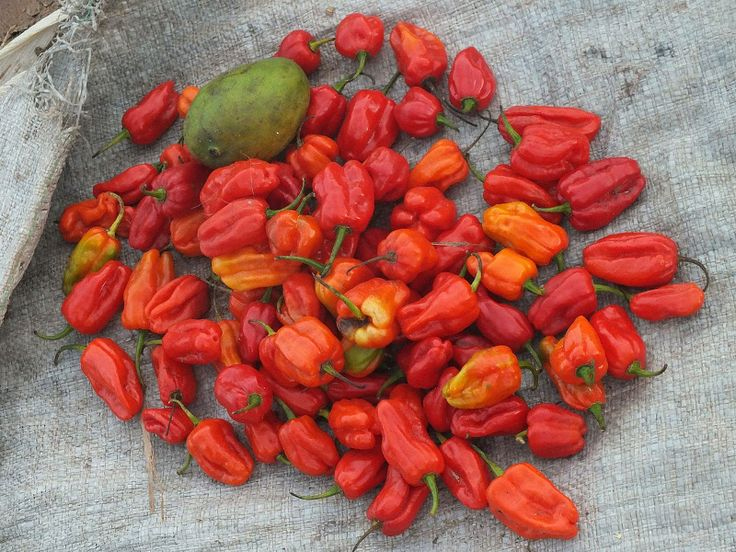 Camaroes Piri-Piri (Mozambican, Angolan shrimp in fiery red pepper sauce)