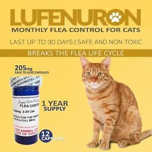 12 Monthly Capsules Flea Control Lufenuron 205 MG Cats 2 20 lbs Generic Program | eBay