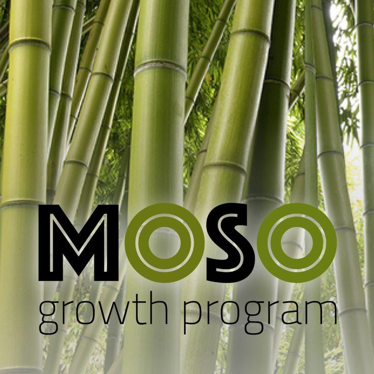 Moso bamboo is one of the world's fastest growing plants and known for its tremendous strength and heartiness. Grow your business internationally with a collaboration based on shared risk and measurable results. Read more about our Moso Growth Program and FlippedAgency approach on our website www.duffy.agency and see if you qualify for performance-based MarketingServices