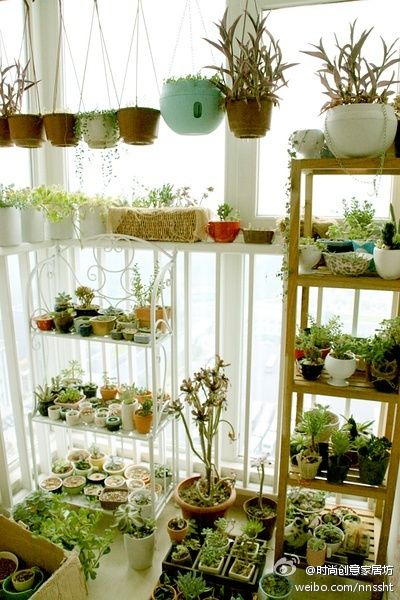 nGreen Thumb, Dreams, Indoor Gardens, Minis Gardens, Plants Plants, Houseplants, Front Room, Green Room, Indoor Plants