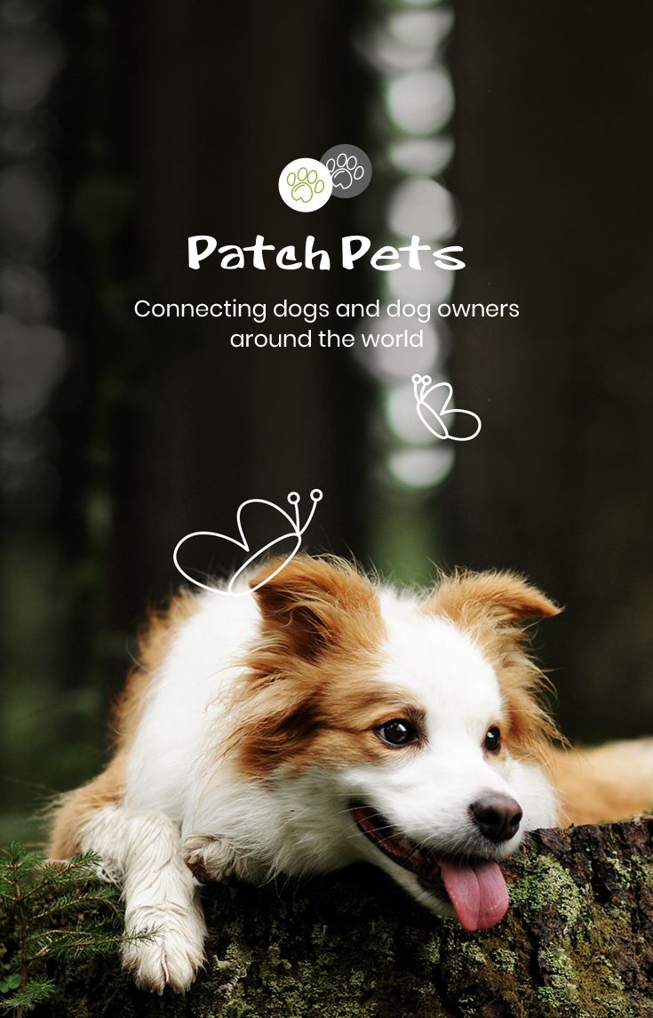 Home Patchpets The Number One Social Media Dog App Dog Friends Dogs Medium Dogs