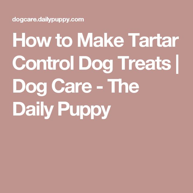 How to Make Tartar Control Dog Treats | Dog Care - The Daily Puppy