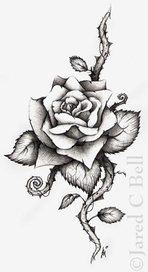 Rose Tattoo Drawings And Designs | ... media art photography category traditional art drawing styles
