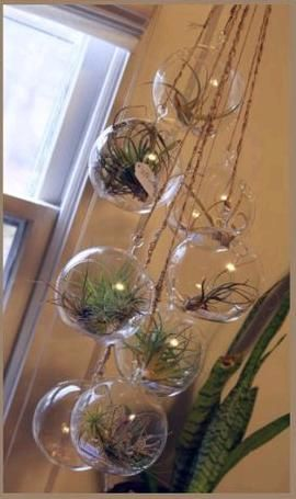 These are sold at Lowes for $7.98 for each glass ball with air plant.