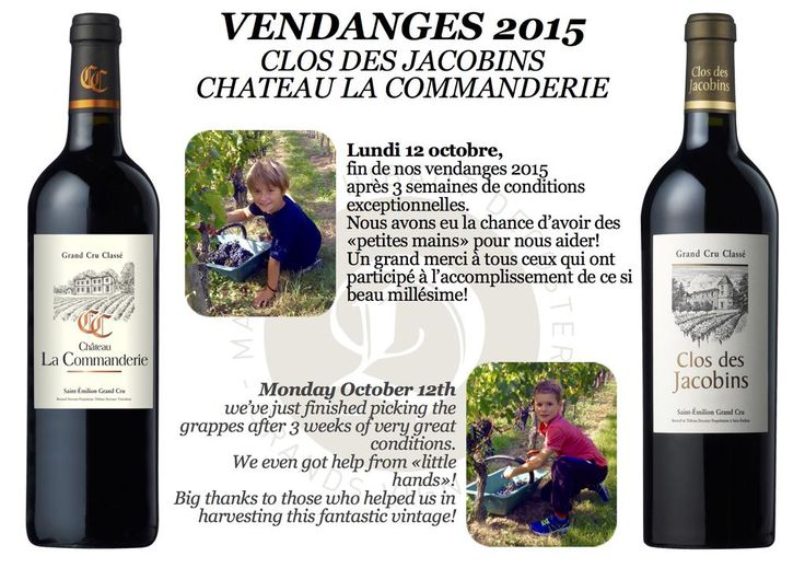 "Magali DECOSTER on Twitter: ""#vendanges2015 #harvest2015 #ClosJacobins #La_Commanderie #MTDecoster #SaintEmilion  #wine http://t.co/Xpy0gS8fzq"""