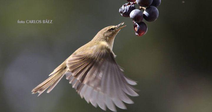 La observación de aves en Canarias
