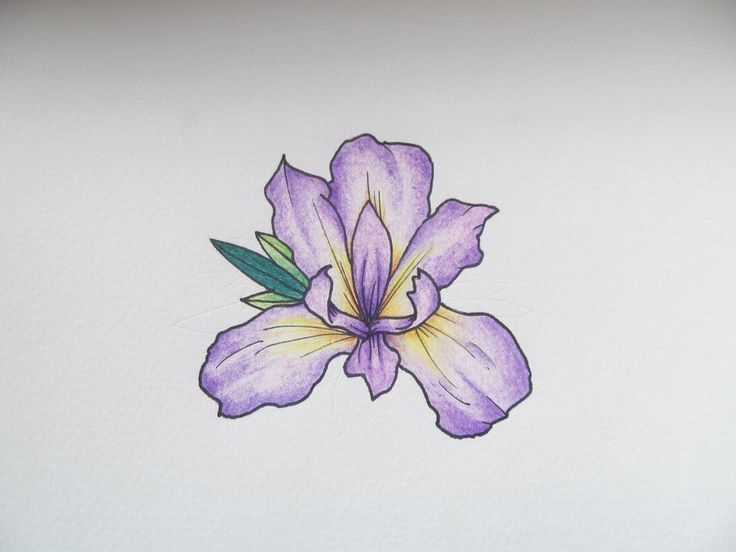 Iris Flower Tattoos Skull and flower tattoos