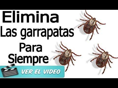 Mira Estos Remedios Naturales Para Eliminar Garrapatas Por Completo De Tu Mascotas Te Lo Agradecerá - YouTube