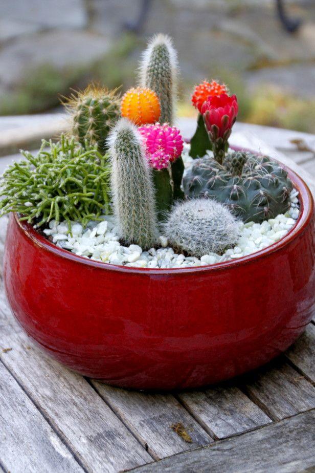 Cactus dish garden create a sleek modern and drought for Succulent dish garden designs