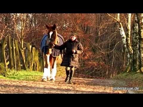 Krafttraining für Pferde