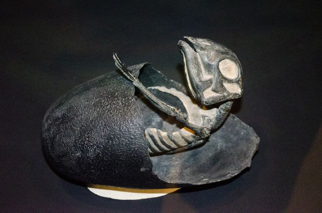 Maiasaura Facts: A Maiasaura hatchling emerging from its egg (Museum of the Rockies)