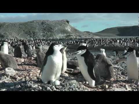 Polární pás - Antarktida 2012.mov - YouTube