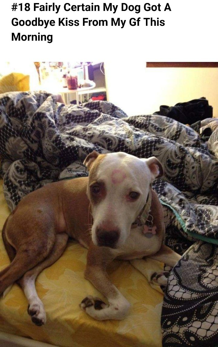 Pin By Sarah Innamorato On Pittie Party Very Cute Dogs Dogs