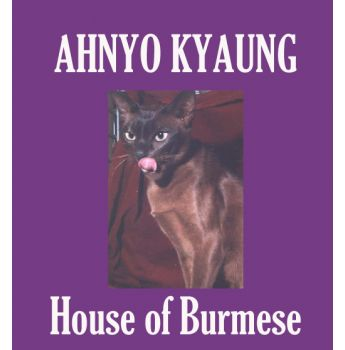 Rescue burmese cats australia