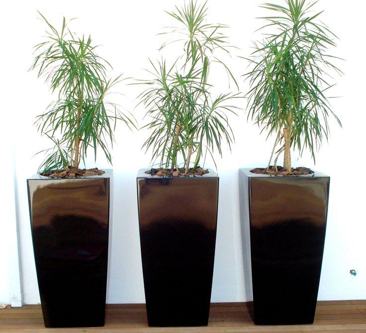 http://palmgrove.wix.com/indoorofficeplants
