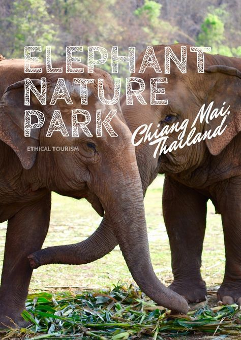 Elephant Nature Park, a must-visit for animal lovers in #ChiangMai #Thailand // #Travel