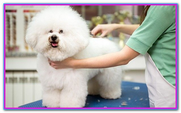 Professional Dog Grooming Tools Reviews The Best Professional Pet Grooming Supplies You Can Use At Home Groomer Dog Grooming Dog Grooming Tools Dog Clippers