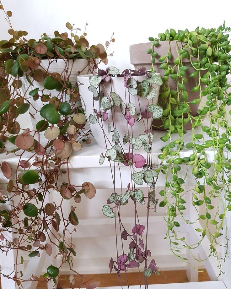 les 185 meilleures images du tableau plantes et tableau v g tal sur pinterest plantes d. Black Bedroom Furniture Sets. Home Design Ideas