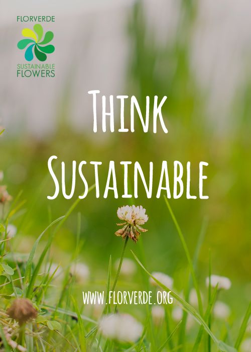 How does Florverde makes the difference to #EnvironmentDay?