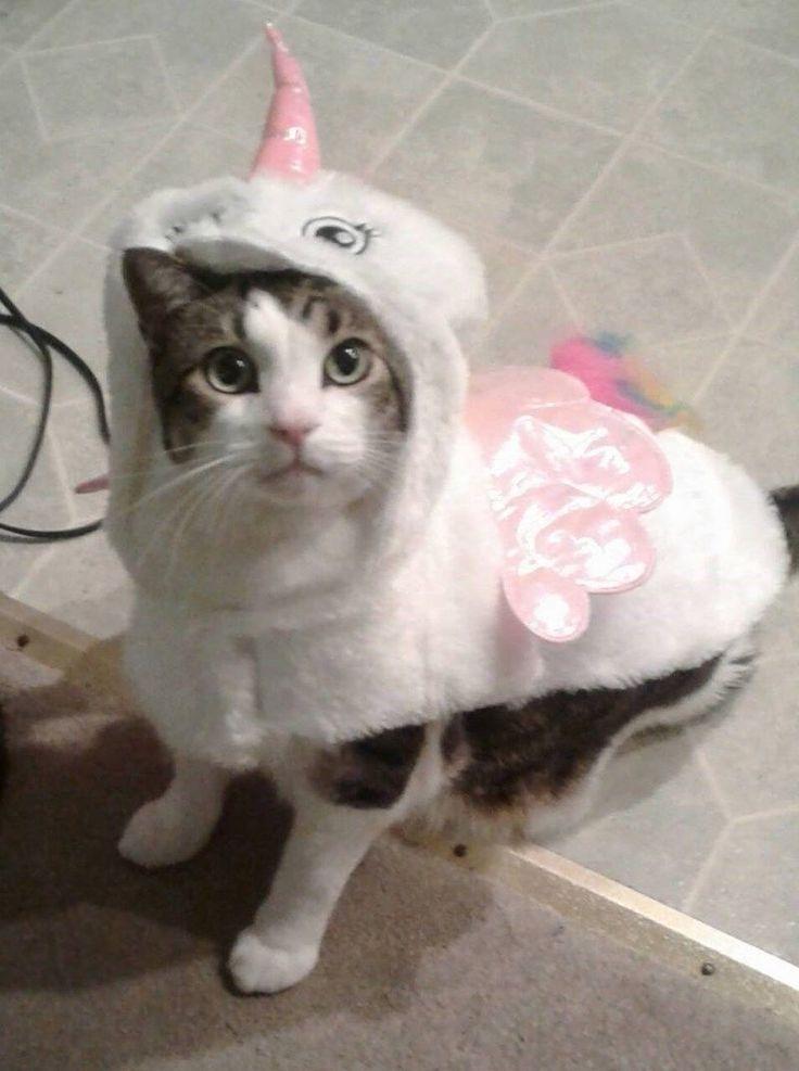 Animals in Halloween costumes – 30 Pics
