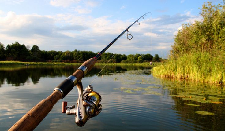 Fishing Rods – What is the Best Fishing Rod to Buy? | Fishing ...
