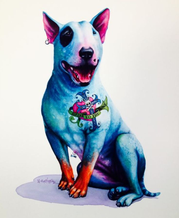 bull terrier artist 17 best images about bull terrier stuff on pinterest 5653
