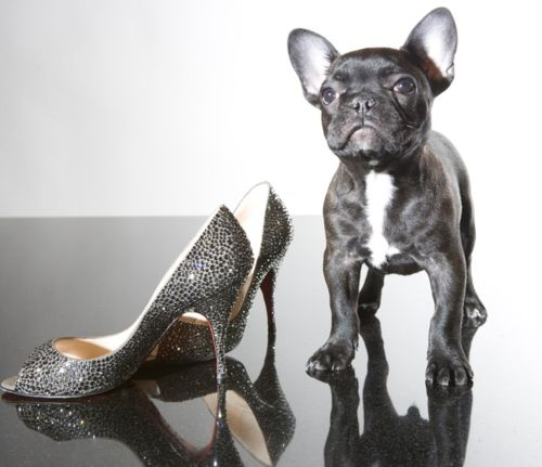 puppy & shoe- how much better can it be?