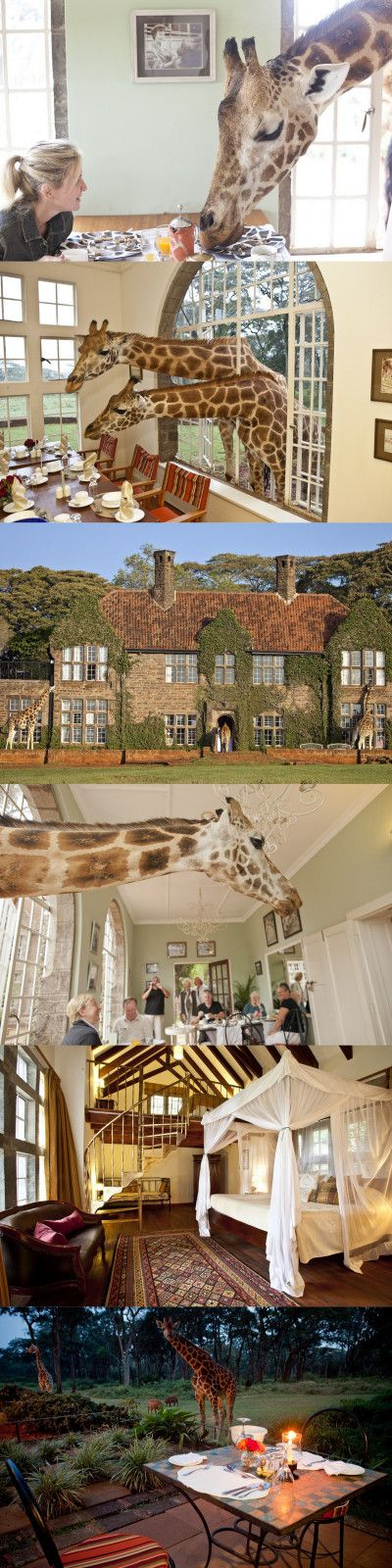 Giraffe Manor is one of the only hotels in the world where you can feed giraffe from your window