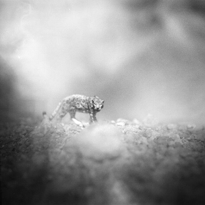 Animali in primo piano, in tutta la loro bellezza. Sullo sfondo paesaggi innevati e deserti. Ma c'è il trucco: gli animaletti sono modellini giocattolo, in plastica, dei figli del fotografo italiano  Andrea Buzzichelli , immortalati con una vecchia fotocamera analogica Hasselblad. Nelle foto
