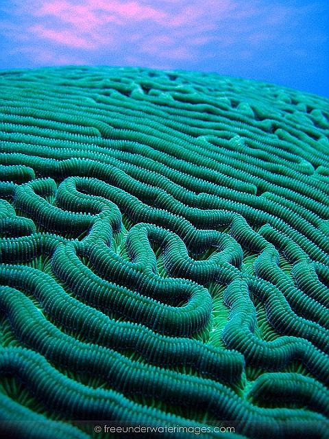 I'm inspired by the colours in this image as well as the unsual patterning of the brain coral, it could be simple yet effect imagery to work with in terms of pattern work.