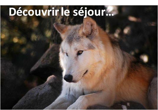Séjour autour du loup :  Enfin pour découvrir l'ultime étape en Lozère qui est la Margeride nous vous proposons une escale au parc des Loups du Gévaudan pour le bonheur des enfants... et des parents ! Vous pourrez apprécier le cadre et admirer de nombreuses espèces de loups encore présentes en Lozère... #tourdefrance2015 #margeride #lozere