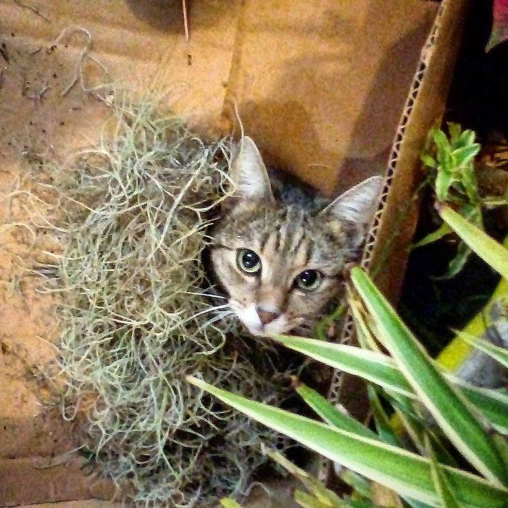 "1 aprecieri, 1 comentarii - Floraria Dorothy's (@florariadorothys) pe Instagram: ""Who is in the box..?? #grigore #catintheflowershop #clujcats #napocats #catsofcluj #cluj…"""
